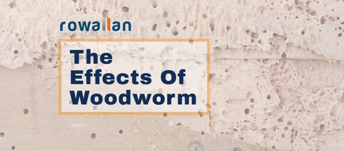 Woodworm Effects Featured